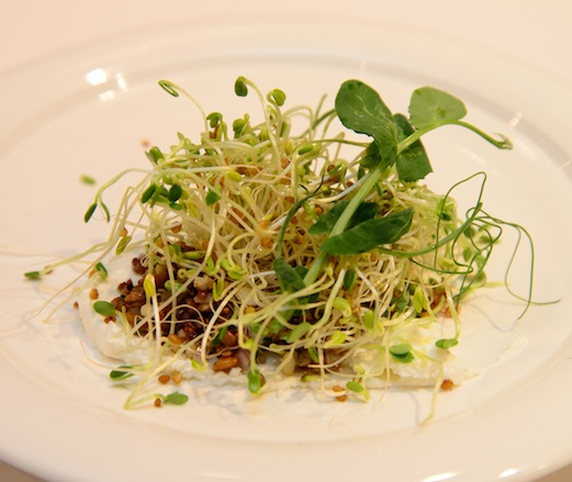 Grain Salad with Labne and Sprouts